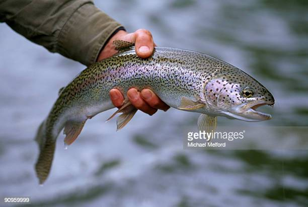 A fisherman holding a rainbow trout.
