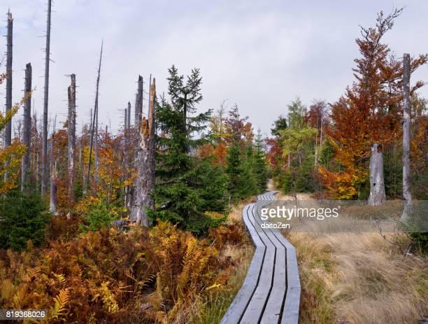 Wood walkway in Lusen Hiking Area, Bavarian Forest, Bavaria, Germany
