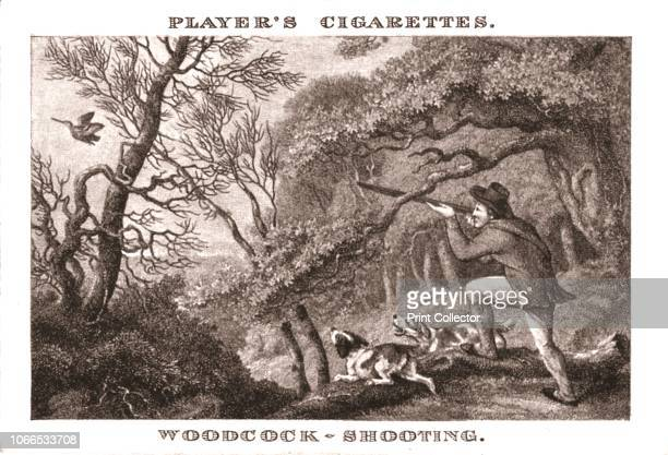 WoodcockShooting' Hunter with gun and dogs No25 in a series of 25 Old Sporting Prints Cigarette Cards After Samuel Howitt [John Player Sons...