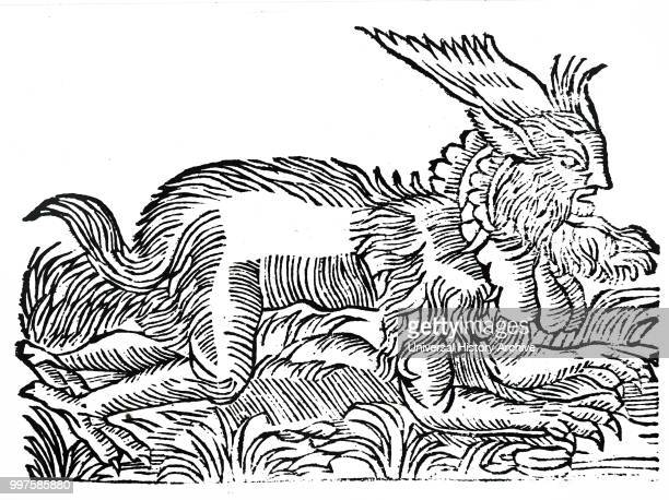 Woodcut engraving depicting a Forest Demon supposed to have been captured in Germany in 1531 and reported to exist in the forests around Salzburg and...