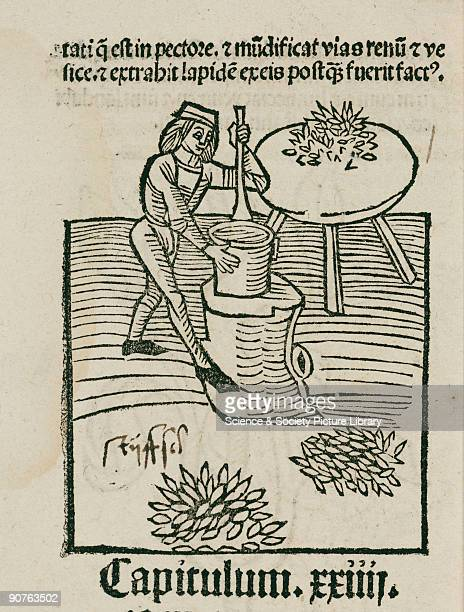 Woodcut from �Hortus Sanitatis� printed by Johann Pruss in Strasbourg in 1497 Hortus Sanitatis was the most popular and influential herbal of its...