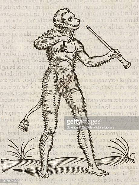 Woodcut from �The Historie of fourefooted beastes� by Edward Topsell published in London in 1607 Topsell likened satyrs to apes as this hairy...
