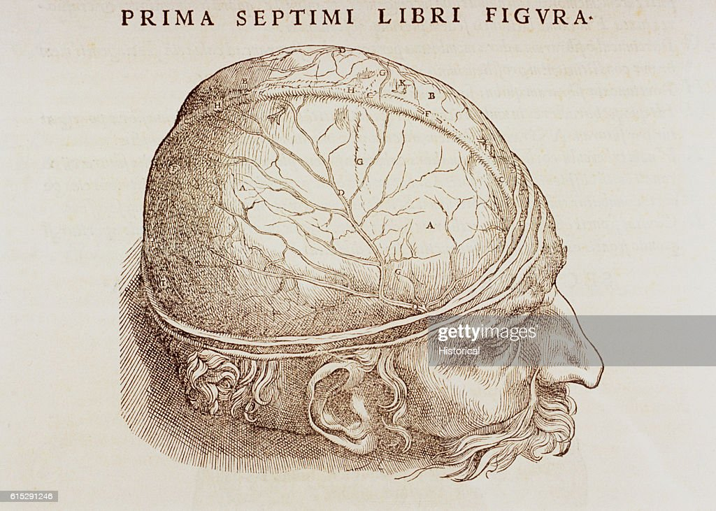 Woodcut Illustration of Dura Mater by Andreas Vesalius Pictures ...