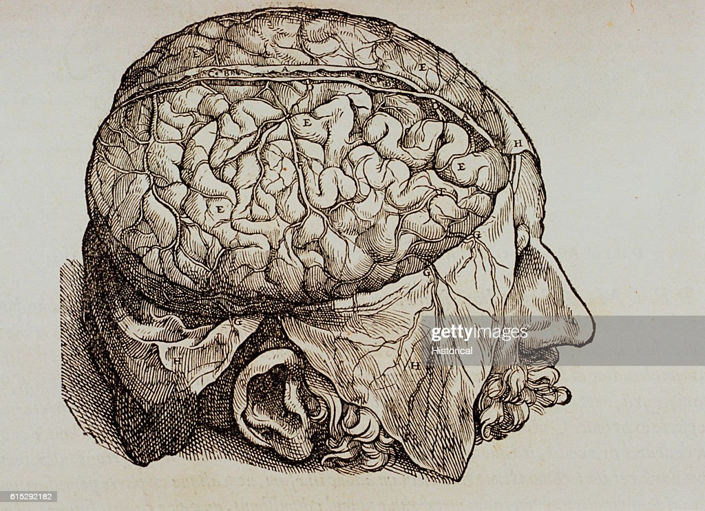Woodcut Illustration of the Cerebrum by Andreas Vesalius Pictures ...