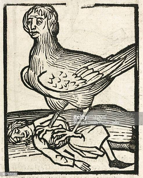 Woodcut of a winged harpy and her prey In Greek mythology these were creatures with women�s heads and sharp claws Illustration from �Hortus...