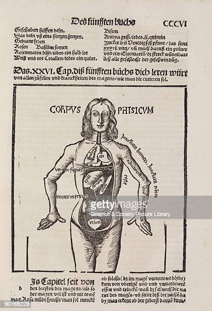 Woodcut of an anatomical female figure with internal organs exposed which closely resembles an earlier engraving in �Margarita Philosophica� by...