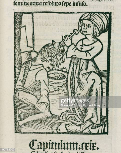 Woodcut showing a man being deloused three lice can be seen around the bowl Illustration from �Hortus Sanitatis� printed by Johann Pruss in...