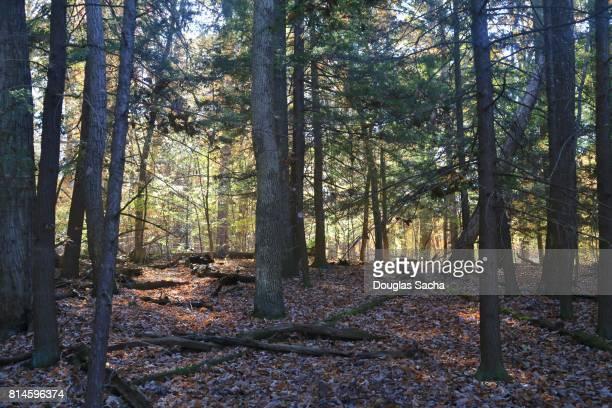 Wooded Glade at Killbuck Marsh Wildlife Area, Shreve, Ohio, USA