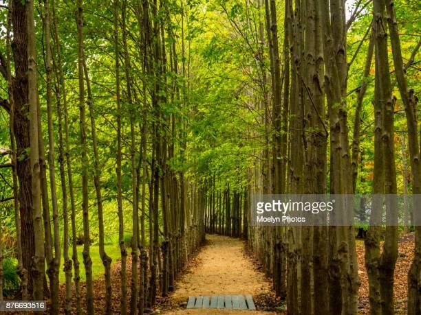 Wooded Path - Hamilton NJ