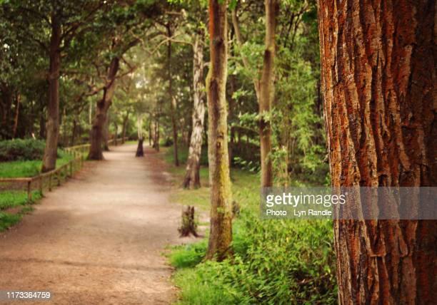 wooded path in sherwood forest - ノッティンガムシャー ストックフォトと画像