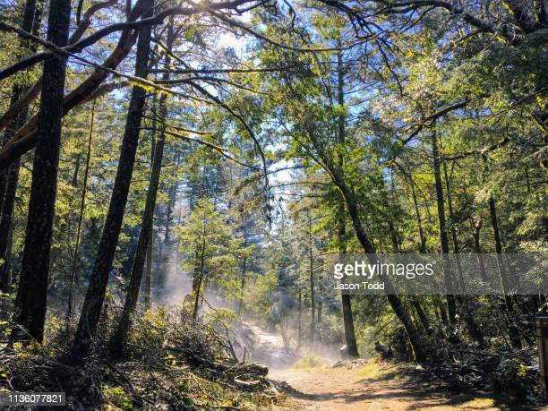 wooded trail through wilderness with steam and fog - jason todd stock photos and pictures