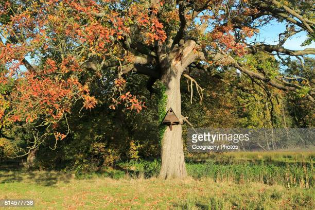 Wooden barn owl nest box on tree Sutton Suffolk England UK