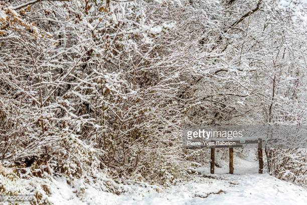 wooden barrier on a snowy hiking path - all weather running track stock pictures, royalty-free photos & images