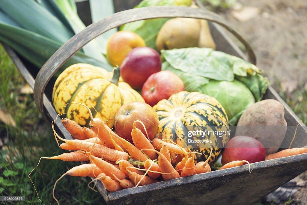 Wooden basket full of fresh, organic vegetables : Stock Photo