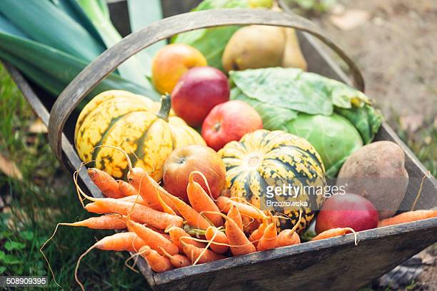 wooden basket full of fresh, organic vegetables - gewas stockfoto's en -beelden