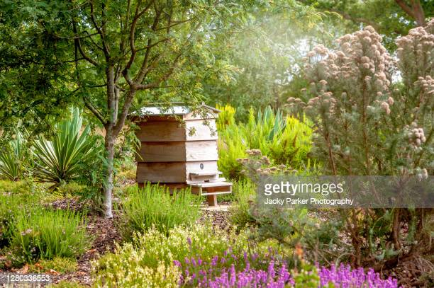 a wooden bee hive in an english summer garden with shrubs and trees - domestic garden stock pictures, royalty-free photos & images