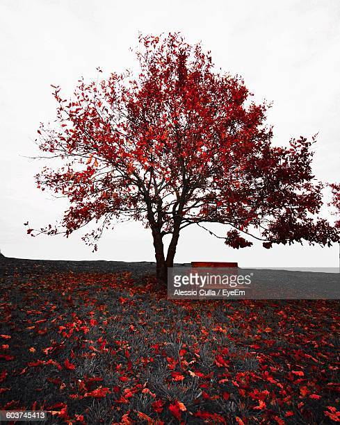 Wooden Bench By Autumn Tree On Grassy Field