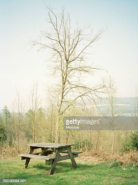 wooden bench by trees, overlooking country landscape - microzoa fotografías e imágenes de stock