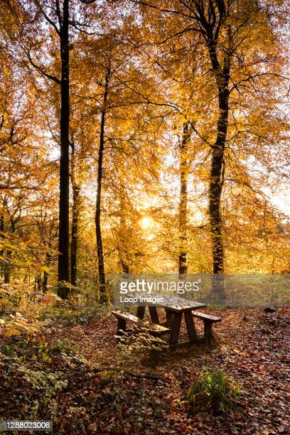 Wooden bench in an autumnal forest in the lower Wye valley in Wales.