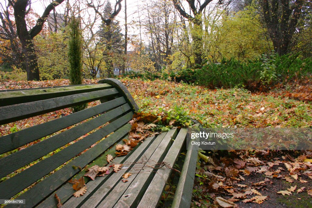 Wooden Bench With Leaves In Autumn Park Botanical Garden