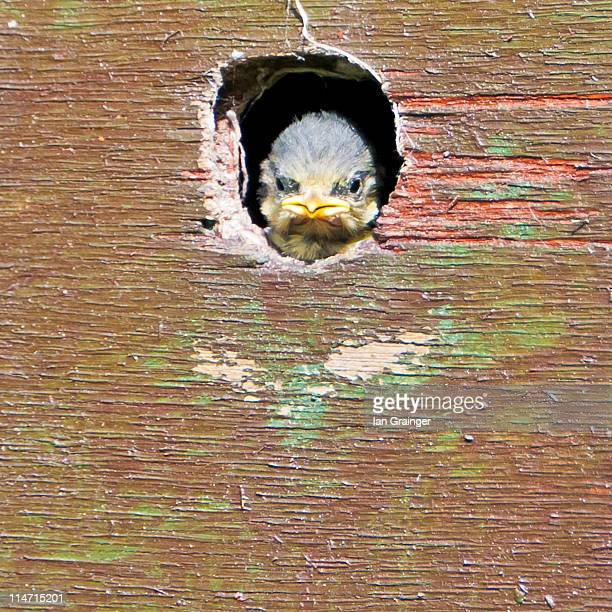 wooden bird box - ian grainger stock pictures, royalty-free photos & images