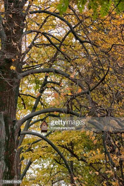 wooden bird cage and tree branches in autumn. - emreturanphoto stock pictures, royalty-free photos & images