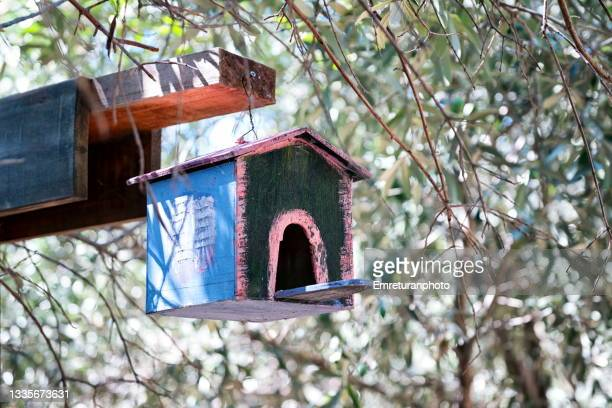 wooden bird house under olive tree - emreturanphoto stock pictures, royalty-free photos & images