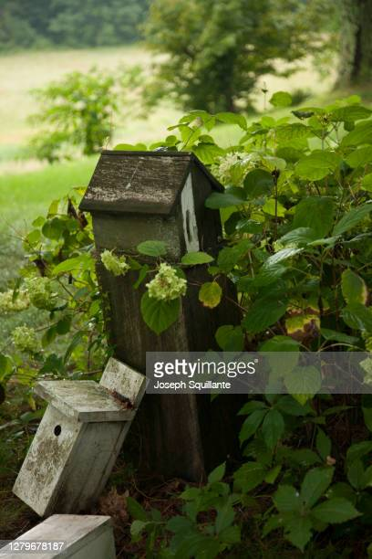 wooden birdhouse in country garden - joseph squillante stock pictures, royalty-free photos & images
