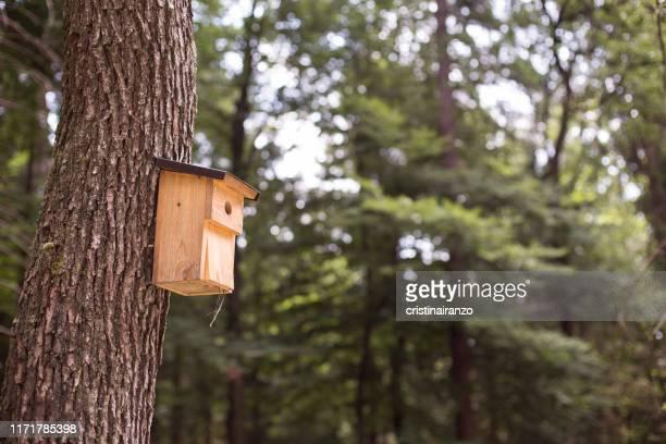 wooden birdhouse - vogelhäuschen stock-fotos und bilder