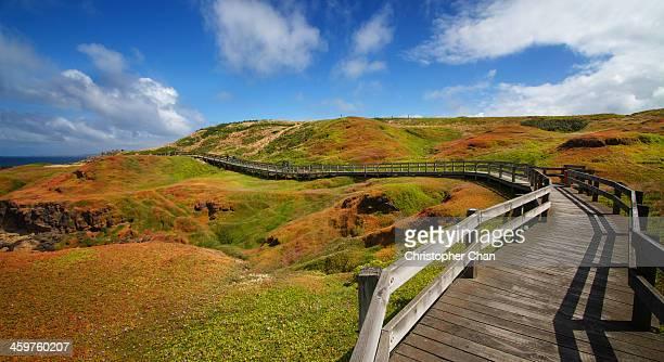 Wooden boardwalk curving through landscape
