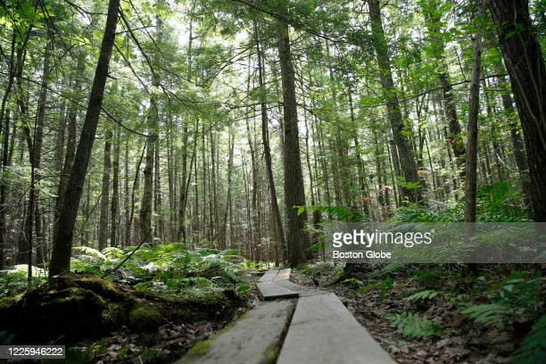 Wooden boardwalk leads through the Bradford Bog just down the street from where Ghislaine Maxwell was arrested in Bradford, NH on July 7, 2020....