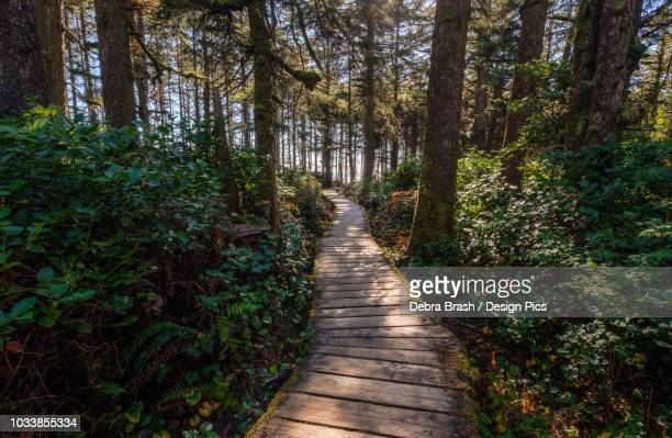 Wooden boardwalk trail at Long Beach, Pacific Rim National Park, on the West coast of Vancouver Island