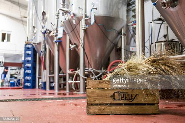 Wooden box with barley in a beer factory