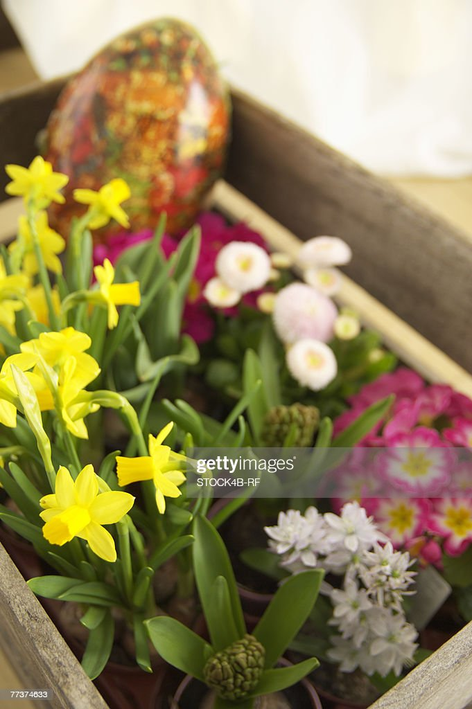 Wooden box with flowers, close-up, high angle view : Photo