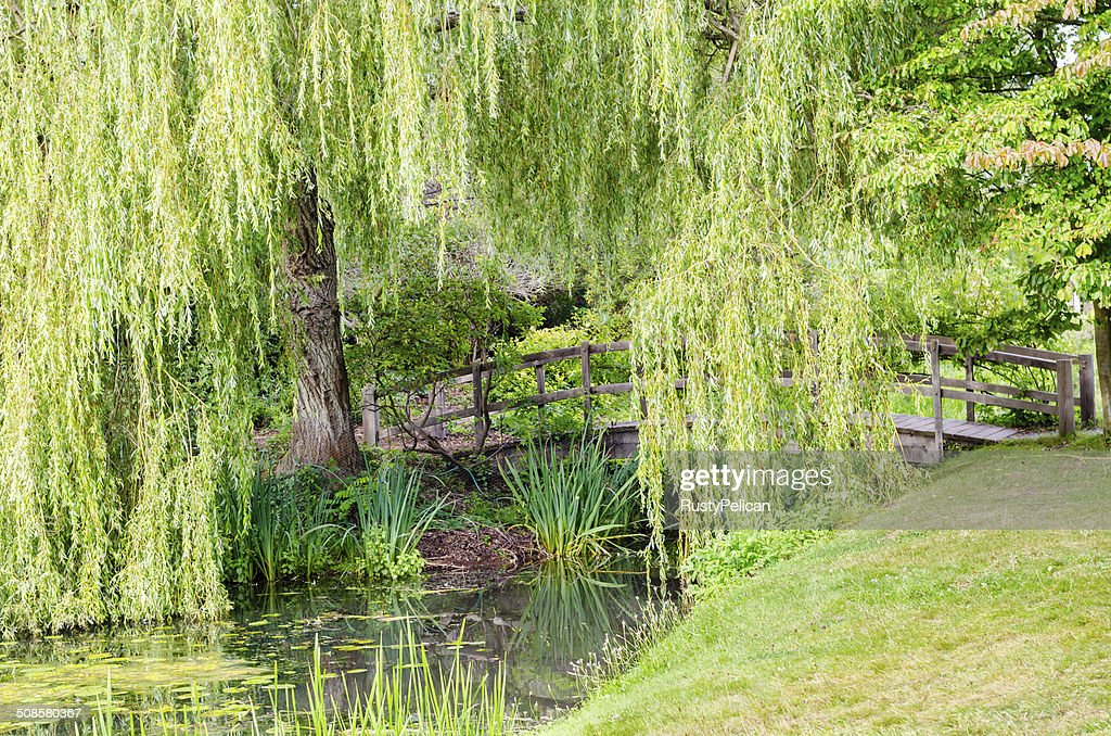 Wooden Bridge Crossing Tranquil Stream : Stock Photo