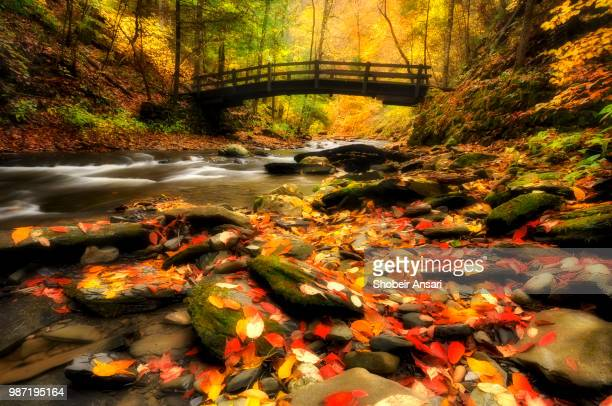 wooden bridge in fillmore glen state park, finger lakes, ny - finger lakes stock pictures, royalty-free photos & images