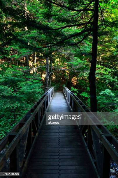 Wooden bridge in forest, Azumino, Japan