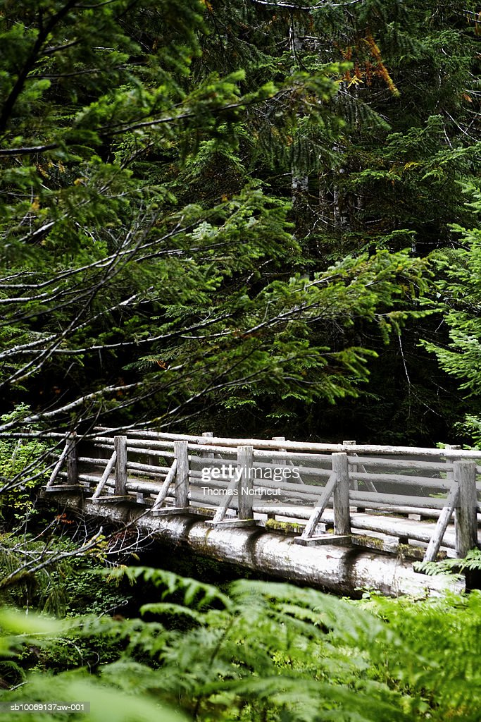 Wooden bridge in forest : Stockfoto