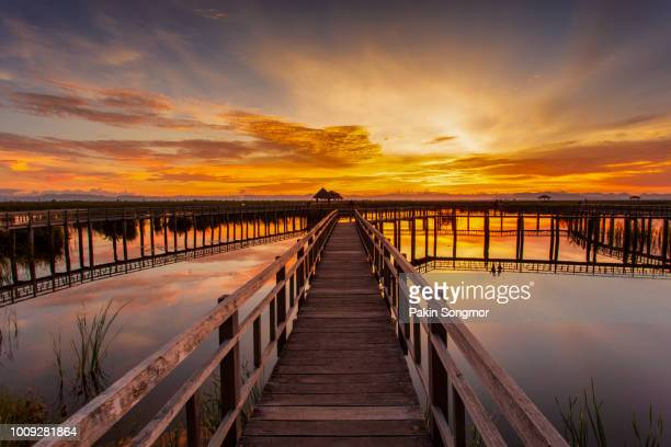 wooden bridge in lotus lake on sunset time at khao sam roi yot national park - hua hin thailand stock pictures, royalty-free photos & images