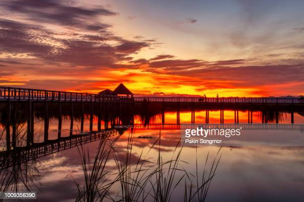 wooden bridge in lotus lake on sunset time at khao sam roi yot national park, thailand - prachuap khiri khan province stock pictures, royalty-free photos & images