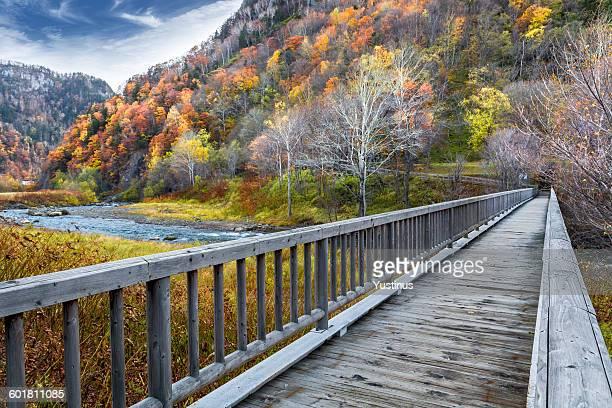 Wooden bridge in park, Hokkaido, Japan