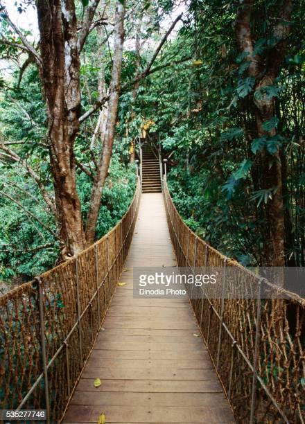 Wooden bridge in Wayanad, Kerala, India.