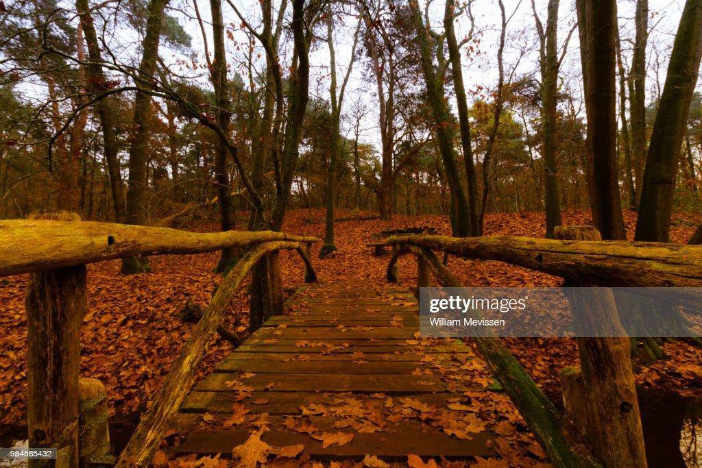 Wooden Bridge : Stockfoto