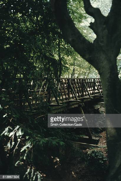 Wooden bridge through old growth forest 1965