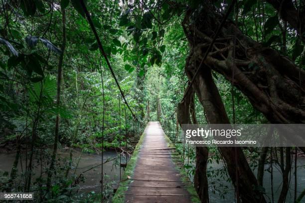 wooden bridge through the forest - iacomino costa rica foto e immagini stock