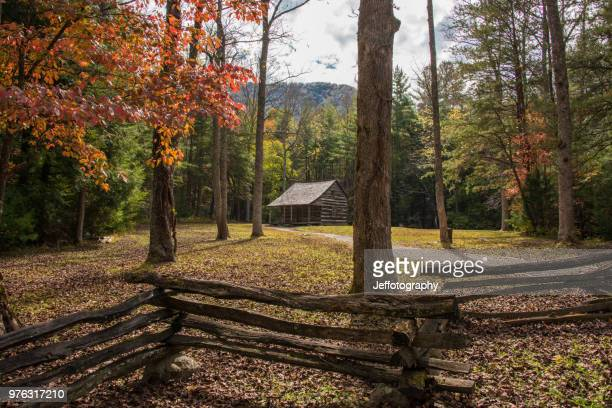 wooden cabin in middle of pine forest, cades cove, tennessee, usa - cades cove stock pictures, royalty-free photos & images
