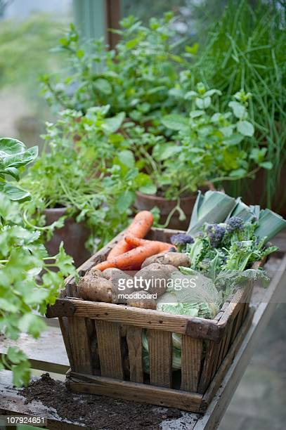 wooden crate of fresh vegetables - streatham stock pictures, royalty-free photos & images