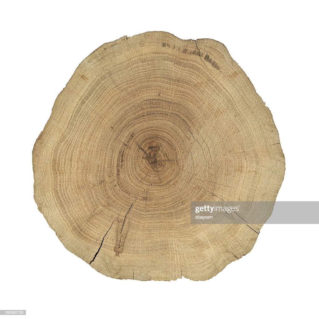 Wooden cross section : Stock Photo