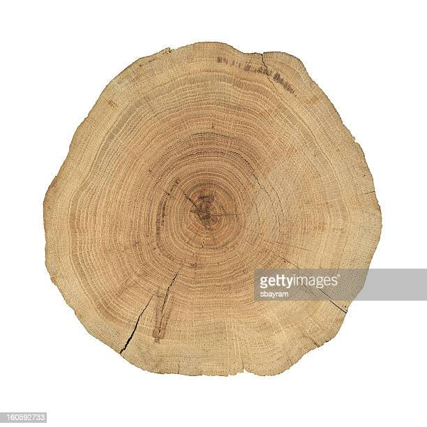 wooden cross section - cross section stock pictures, royalty-free photos & images