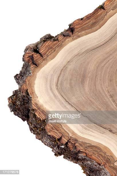 木製の断面